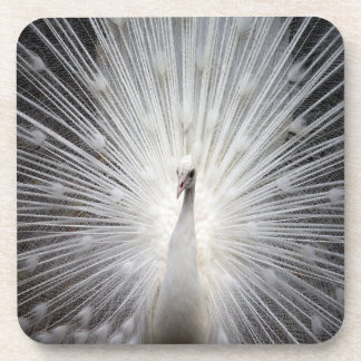 Beautiful & Unique White Peacock Coasters ~ 6