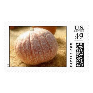 Beautiful Unusual Pumpkin Postage