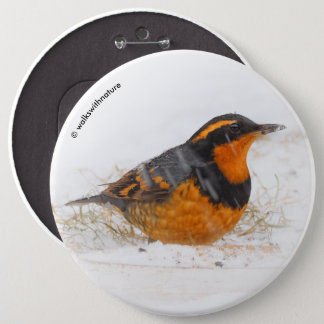 Beautiful Varied Thrush on a Snowy Winter's Day Pinback Button