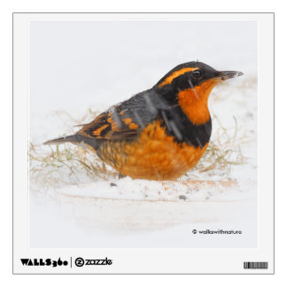 Beautiful Varied Thrush on a Snowy Winter's Day Wall Sticker