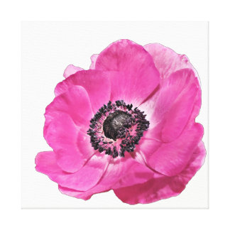 Beautiful Vibrant Bright Pink Poppy Floral White Canvas Print