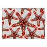 Beautiful Vibrant Red Starfish Sand Ocean Sealife Greeting Cards