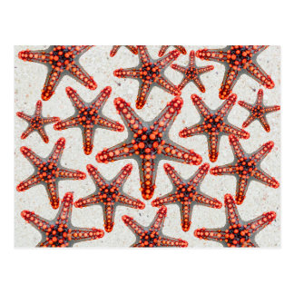 Beautiful Vibrant Red Starfish Sand Ocean Sealife Postcard