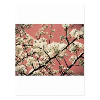 Beautiful Vintage Cherry Blossom Postcard