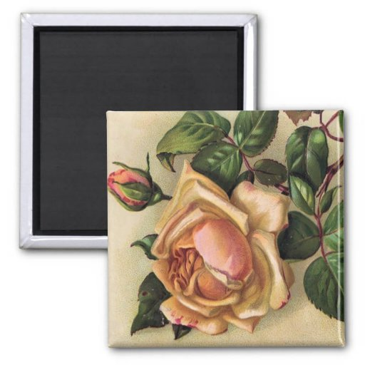 *Beautiful Vintage Roses* 2 Inch Square Magnet