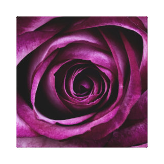 Beautiful violet rose canvas print