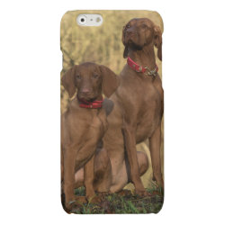 Case Savvy iPhone 6 Glossy Finish Case with Vizsla Phone Cases design