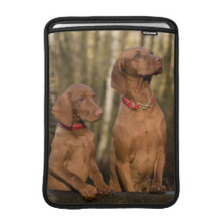 Macbook Air Sleeve with Vizsla Phone Cases design