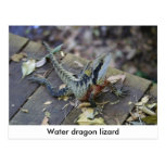 Beautiful Water Dragon Postcard