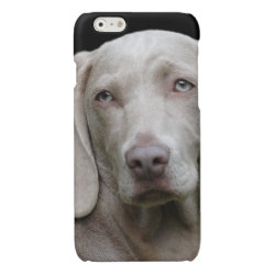 Case Savvy iPhone 6 Glossy Finish Case with Weimaraner Phone Cases design