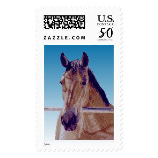 Beautiful Western Horse Postage