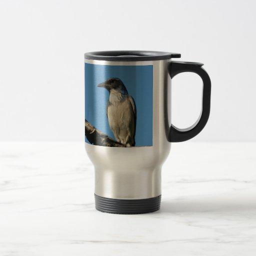 Beautiful Western Scrub Jay Coffee Mug