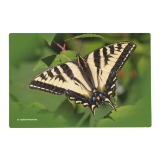 Beautiful Western Tiger Swallowtail Butterfly Placemat