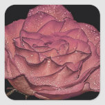 Beautiful Wet Pink Rose Flower Floral Photo Stickers