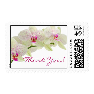 Beautiful White and Hot Pink Orchids Thank You! Postage