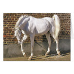 Beautiful White Arabian Horse Greeting Card