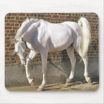 Beautiful White Arabian Horse Mouse Pads