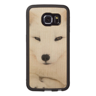 Beautiful white arctic fox face with eye contact wood phone case
