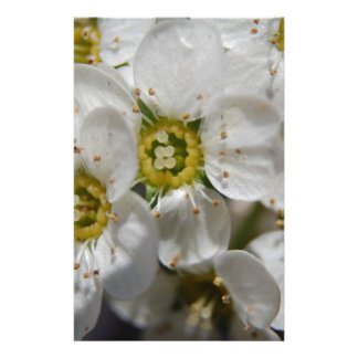 Beautiful White Bolossom Flowers & Yellow centres Stationery