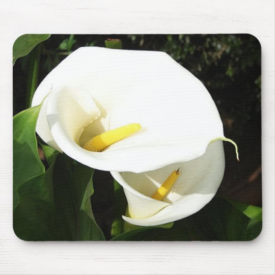 Beautiful White Calla Flowers In Bright Sunlight Mouse Pad