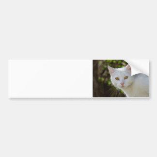 Beautiful White Cat Bumper Sticker