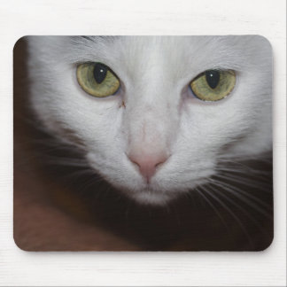 Beautiful White Cat Mouse Pad
