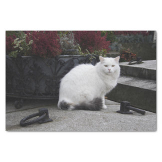 "Beautiful White Cat On A Grave 10"" X 15"" Tissue Paper"