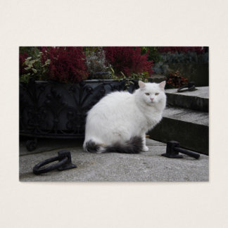 Beautiful White Cat On A Grave Business Card