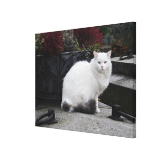 Beautiful White Cat On A Grave Canvas Print