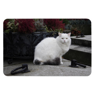 Beautiful White Cat On A Grave Magnet