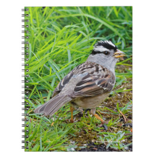 Beautiful White-Crowned Sparrow in the Grass Notebook