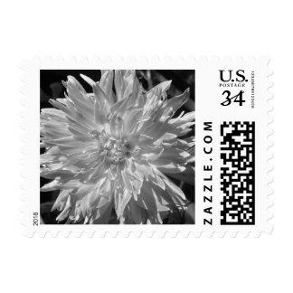 Beautiful White Dahlia Postage Stamp