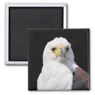 Beautiful white eagle portrait magnet