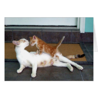 Beautiful White Female Calico Cat and Kitten Greeting Card