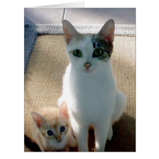 Beautiful White Female Calico Cat and Kitten Large Greeting Card