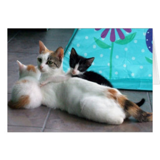 Beautiful White Female Calico Cat and Kittens Greeting Card