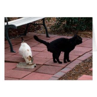 Beautiful White Female Cat and Black Male Card