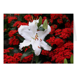 Beautiful white floral greeting card