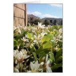 Beautiful White Flowers Card