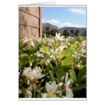 Beautiful White Flowers Cards