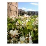 Beautiful White Flowers Post Card
