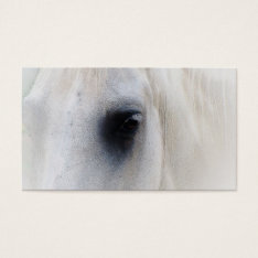 Beautiful White Horse Closeup Business Card at Zazzle