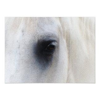 Beautiful White Horse Closeup Card