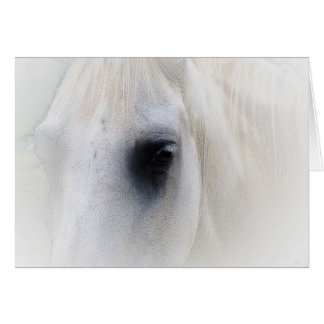 Beautiful White Horse Closeup Card