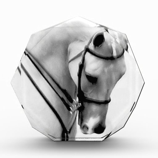 Beautiful white Horse head Acrylic Award