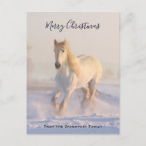 Beautiful White Horse in the Snow Photo Christmas Holiday Postcard