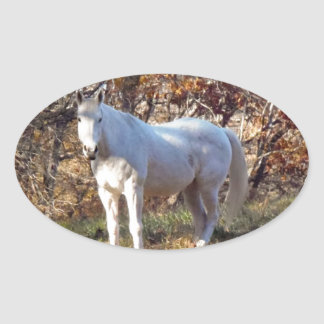 Beautiful White Horse Oval Sticker