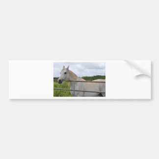 Beautiful white horse photograph bumper sticker