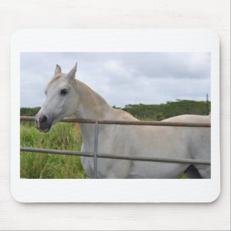 Beautiful white horse photograph mouse pad
