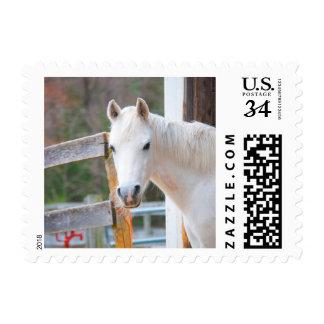Beautiful White Horse Postage